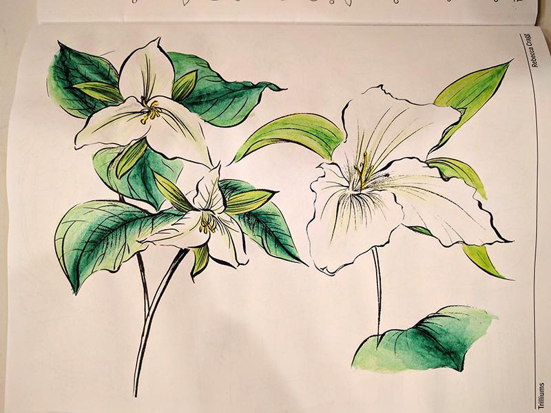 Trilliums